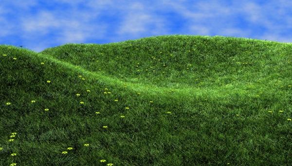 Prato verde 600 marco cuomo fotografia marco cuomo for Prato verde